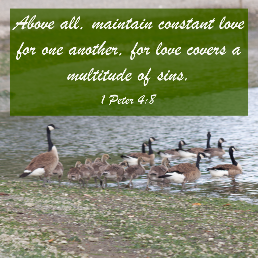 Above all, maintain constant love for one another, for love covers a multitude of sins. 1 Peter 4:8