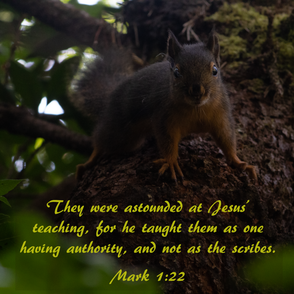 They were astounded at his teaching, for he taught them as one having authority, and not as the scribes.  Mark 1:22