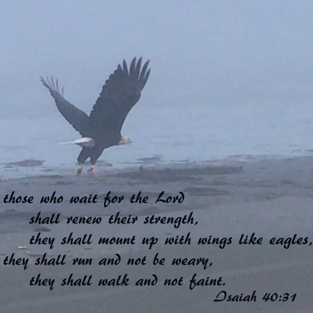 those who wait for the Lord shall renew their strength,     they shall mount up with wings like eagles, they shall run and not be weary,     they shall walk and not faint. Isaiah 40:31